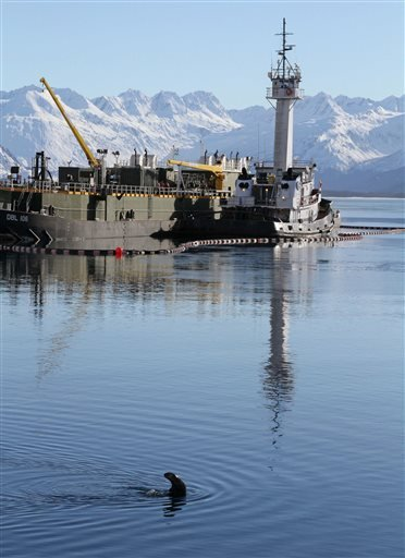 In this photo taken Thursday, Feb. 27, 2014, a sea otter swims in the bay near the ferry dock in Valdez, Alaska.