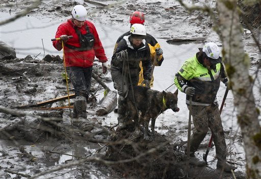 Search and rescue teams navigate the wet, muddy terrain at the west side of the mudslide on Highway 530 near mile marker 37 on Sunday, March 30, 2014, in Arlington, Wash.