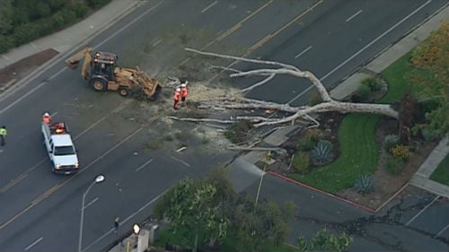 Chopper 8 spotted this tree down across Midland Road in Poway Wednesday morning, April 30.