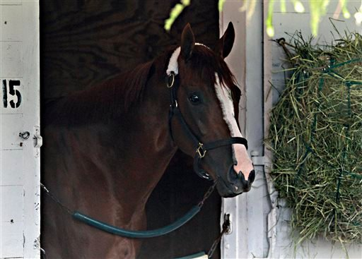 Kentucky Derby winner California Chrome looks out of his stall at Churchill Downs in Louisville, Ky., Sunday, May 4, 2014. (AP Photo/Garry Jones)