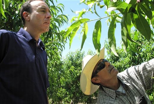 In this April 29, 2014 photo, Dan Gerawan, owner of at Gerawan Farming, Inc., left, talks with crew boss Jose Cabello in a nectarine orchard near Sanger, Calif.