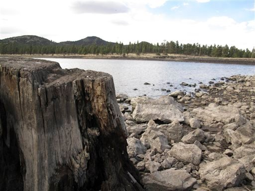 In this April 11, 2014 photo, low reservoir levels reveal tree stumps and a cracked lake bed in Williams, Ariz.