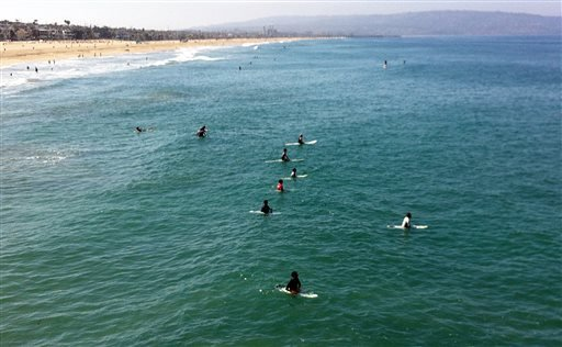 Surfers and swimmers return to the ocean Sunday, July 6, 2014, one day after a swimmer was bitten by a great white shark off the Southern California beach city of Manhattan Beach, Calif.