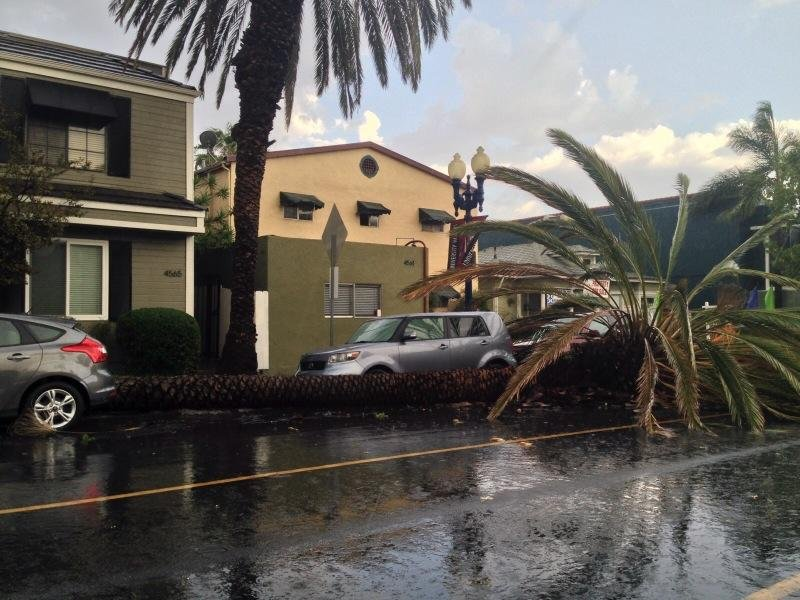 Storm damage in University Heights.