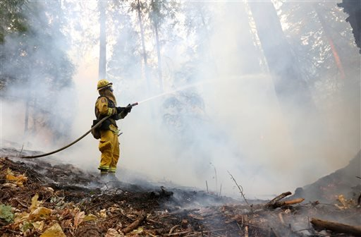Smoke rises from a burning tree as a firefighter puts water on flames approaching a containment line, while fighting the King fire near Fresh Pond, Calif., Thursday, Sept. 18, 2014. (AP)