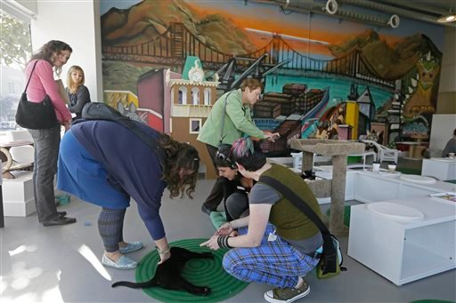 In this photo taken Thursday, Nov. 6, 2014, a number of women play and photograph cats at the Cat Town Cafe in Oakland, Calif.