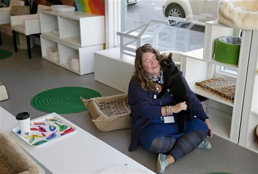 In this photo taken Thursday, Nov. 6, 2014, a cat climbs onto a woman sitting on the floor at the Cat Town Cafe in Oakland, Calif.