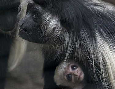 Image courtesy of the San Diego Zoo.