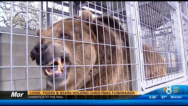 lions_tigers_bears_fundraiser.jpg