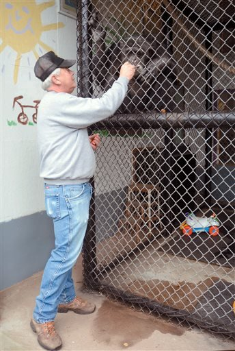 Patrick Lavery, owner, interacts with Tommy a chimpanzee on Oct. 29, 2014 in Gloversville, N.Y.