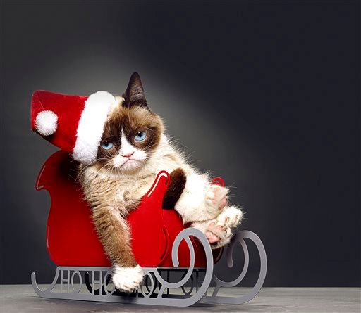 """This undated photo provided by Lifetime shows Grumpy Cat, who stars in the Lifetime network's live-action film """"Grumpy Cat's Worst Christmas Ever."""" (AP Photo/Lifetime)"""