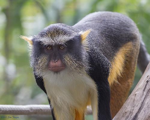 (Image courtesy San Diego Zoo)