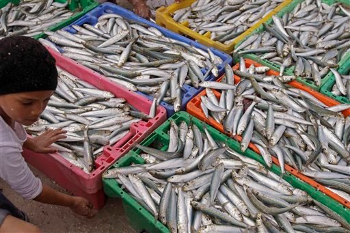 In this Sunday, Nov 20, 2011 file photo, a child looks over a day's catch of sardines at the Hout Bay Harbour near Cape Town, South Africa.