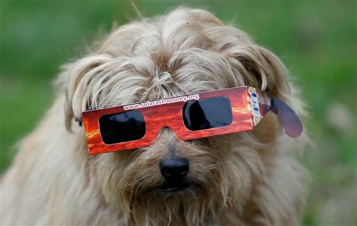 A dog wears solar glasses in preparation to view the eclipse in Regent's Park in London, Friday, March 20, 2015. Unfortunately due to heavy cloud cover, the eclipse was not visible in London. (AP Photo/Kirsty Wigglesworth)
