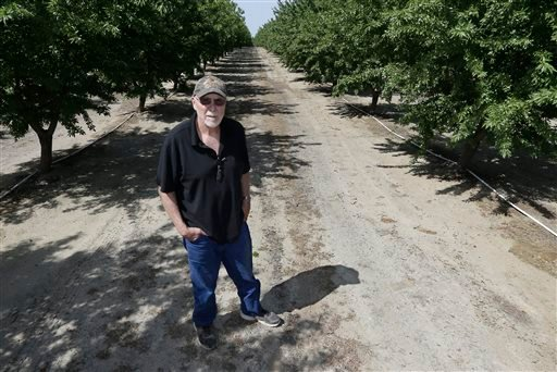 In this Tuesday March 31, 2015 photo, almond grower Bob Weimer poses in his almond orchard near Atwater, Calif. As California cities and towns move to mandatory water cutbacks in the fourth year of extreme drought, the state's $6.5 billion almond crop has