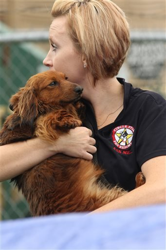 Tonia Hauser with Circle Star Pet Resort carries the dog to a waiting kennel that the City of Van Marshal's Office set for residents to clam lost pets Monday, May, 11, 2015. The makeshift kennel already had several pets in it after they escape from their