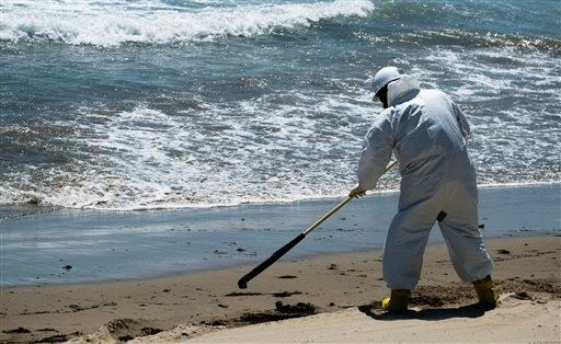 A cleanup crew worker rakes oil-contaminated seaweed into piles at El Capitan State Beach, north of Goleta, Calif., Friday, May 22, 2015. Officials say the sheen of oil is now thinner than a coat of paint and is becoming harder to skim from choppy, wind-d