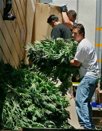 In this June 22, 2005, file photo, Drug Enforcement Agents remove marijuana plants from a dispensary in San Francisco.