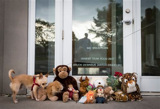 Bernie the dog sniffs stuffed animals placed at the doorstep of Dr. Walter Palmer's River Bluff Dental office in Bloomington, Minn., Tuesday, July 28, 2015.