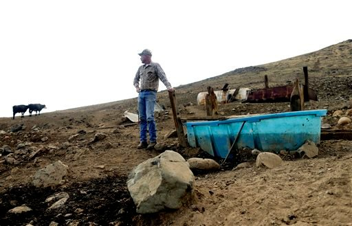 In this July 2, 2015 photo, rancher Steve Drumright looks toward his cattle, grazing on a barren hillside in Tulare County, outside of Porterville, Calif. Drumright's herd is forced to search the parched Tulare County hills for the dwindling vegetation a