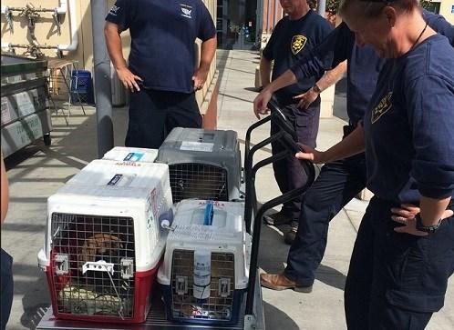 The San Diego Humane Society