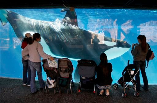 In this Nov. 30, 2006, file photo people watch through the glass as a killer whale passes by while swimming in a display tank at SeaWorld in San Diego.