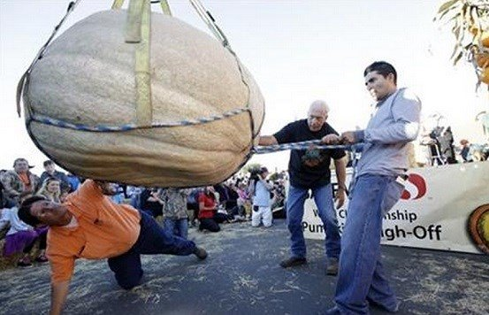 Ruben Frias, at right, of Napa, Calif. gets his pumpkin lifted for a weigh-in with the help of Brad Porter, bottom left, and Joe Borges at the Annual Safeway World Championship Pumpkin Weigh-Off Monday, Oct. 12, 2015, in Half Moon Bay, Calif.