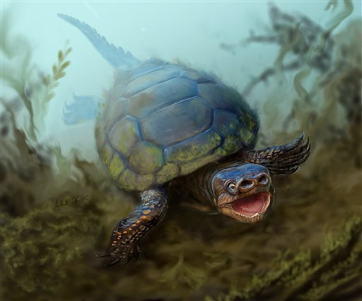 This undated illustration provided by the University of Utah shows a pig-snouted turtle that lived alongside tyrannosaurs and duck-billed dinosaurs. A team from the Natural History Museum of Utah discovered the fossil of the strange-looking turtle in the