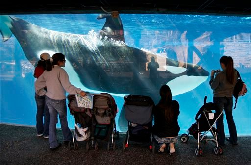 In this Nov. 30, 2006, file photo, people watch through glass as a killer whale swims by in a display tank at SeaWorld in San Diego. A SeaWorld executive says orca shows at the company's San Diego park will end by 2017. CEO Joel Manby cited customer feedb