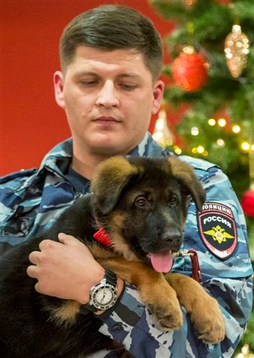 Russian police puppy Dobrynya will take the place of a French service dog Diesel which died in a special operation held in Paris on November 18. (AP Photo/Pavel Golovkin)