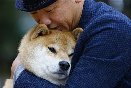 In this Wednesday, Dec. 23, 2015 photo, Shinjiro Ono hugs his Shiba Inu Maru at Ueno Park in Tokyo. Marutaro has 2.2 million followers on Instagram. (AP Photo/Shizuo Kambayashi)