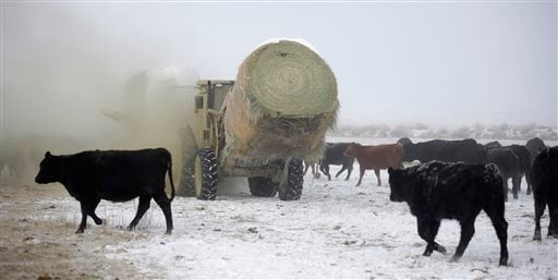 Rancher Jerry Miller, 79, delivers hay to his cattle Saturday, Jan. 9, 2016, on his ranch, in Crane, Ore. Behind the standoff between ranchers and the U.S. government in Oregon is a decades-old idea in the West to take back control of federal lands, a pro