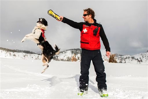 In this 2015 photo provided by Squaw Valley Alpine Meadows, dog supervisor Craig Noble puts his border collie Wylee through some paces on the mountain in Olympic Valley, Calif. (Matt Palmer/Squaw Valley Alpine Meadows via AP)