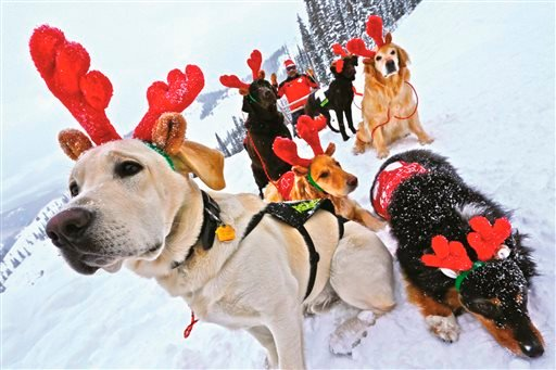 "In this December 2014 photo, ski patrol dogs of Crested Butte Mountain Resort wear antlers, with ski patroller Chris ""Buck"" Myall dressed as Santa, in Crested Butte, Colo. (Chris Segal/Crested Butte Mountain Resort via AP)"