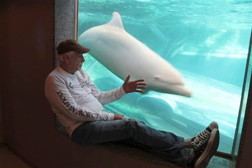 In this Sept. 16, 2015 photo released by DolphinProject.com, Ric O'Barry checks the status of Angel the dolphin at the Taiji Whale Museum in Taiji, Wakayama prefecture, western Japan.