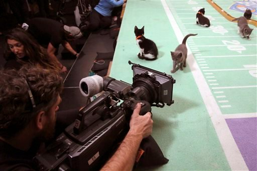 Oct. 21, 2015 file photo, kittens are photographed on the set during a taping of Kitten Bowl III in New York. The Hallmark Channel taped Kitten Bowl III months ahead of Super Bowl Sunday, taking place on Feb. 7. (AP Photo/Mary Altaffer, File)