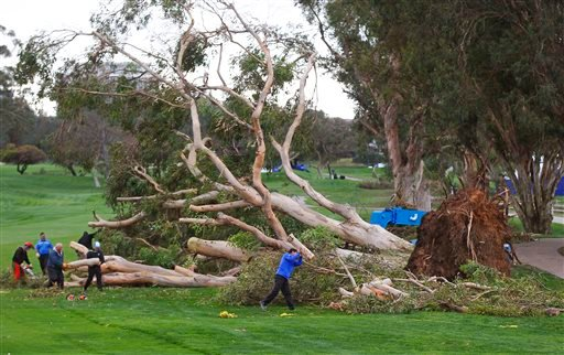 Workers clean up a tree, Monday, Feb. 1, 2016, that fell on the 15th hole of south course at Torrey Pines on Sunday, delaying the Farmers Insurance Open golf tournament, in San Diego. (K.C. Alfred/The San Diego Union-Tribune via AP)