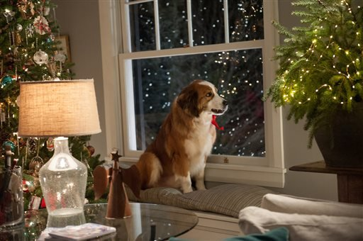 "This Feb. 17, 2015 photo provided by the American Humane Association shows Bolt, a St. Bernard who plays Rags in the movie ""Love the Coopers."""