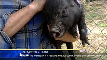 The Tale Of Two Little Pigs