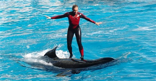 Incidents At Seaworld Parks: Hanna: Trainer Wouldn't Want Killer Whale Harmed