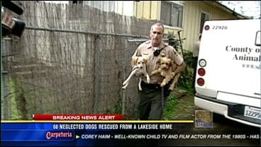 60 neglected dogs rescued from Lakeside home - CBS News 8 ...