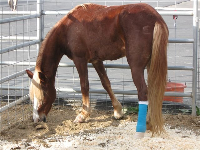 Owners Honda Com >> Search for injured horses' owners - CBS News 8 - San Diego, CA News Station - KFMB Channel 8