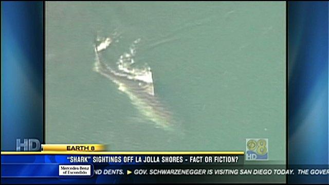 Quot Shark Quot Sightings Off La Jolla Shores Fact Or Fiction Cbs News 8 San Diego Ca News