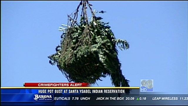 Honda San Diego >> Huge pot bust at Santa Ysabel Indian Reservation - CBS ...