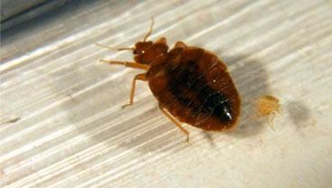 Bed bugs eradicated from san diego39s largest fire station for Bed bugs san francisco