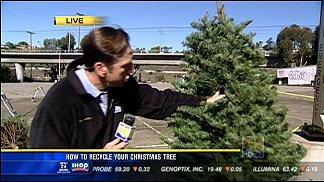 Links - Christmas Tree Recycling In San Diego - CBS News 8 - San Diego, CA