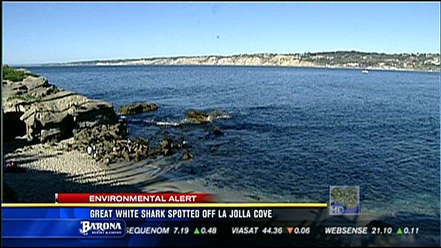 Great White Shark Spotted Off La Jolla Cove Cbs News 8 San Diego Ca News Station Kfmb