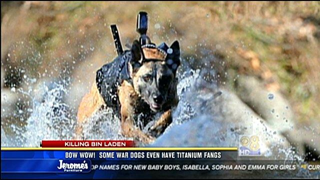 War Dogs Stream Deutsch