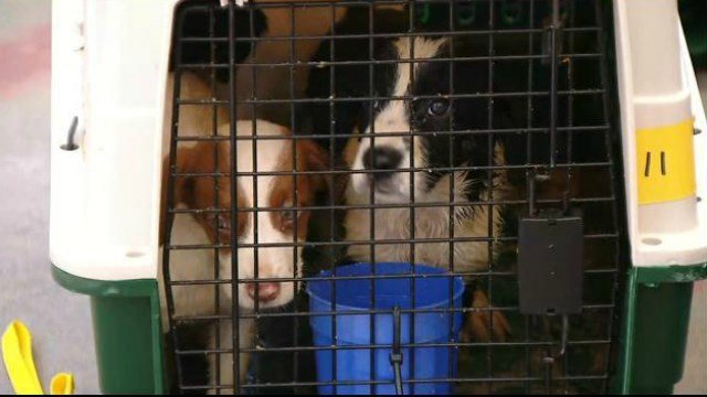 EL CAJON (CNS) - More than 100 dogs and cats arrived in San Diego County Monday from a shelter in Louisiana, where the operators are clearing out space to ...