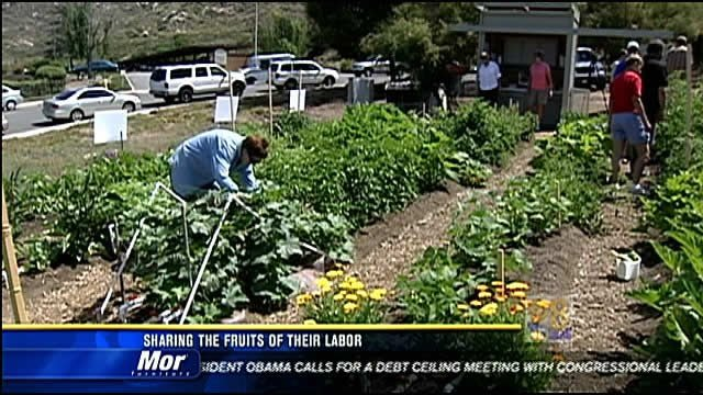 backyard produce project sharing the fruits of their labor cbs news 8 san diego ca news. Black Bedroom Furniture Sets. Home Design Ideas
